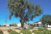 Exclusive private villa in Ibiza with city and sea views (3)
