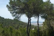 Luxury Villa between Ibiza and Santa Eulalia with amazing views (11)