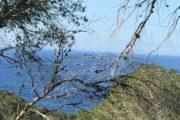 Plot for sale in Cala Salada with licence to build (9)