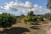 new-build-villa-in-santa-gertrudis-with-large-land-in-the-middle-of-nature (11)